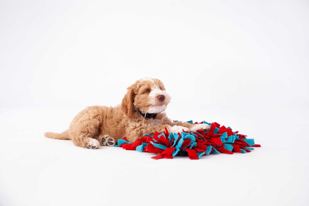 Puppy Training Tips For New Parents Canine Learning Academy