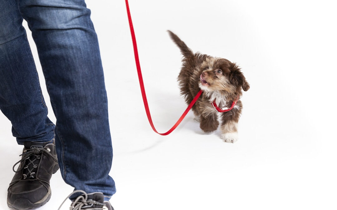 Tips for Walking with Your Dog